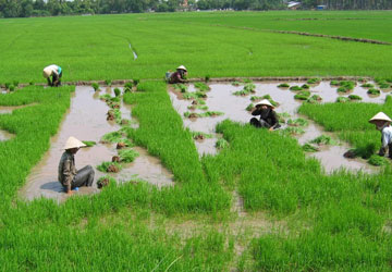 Thời hạn giao đất nông nghiệp cho hộ gia đình