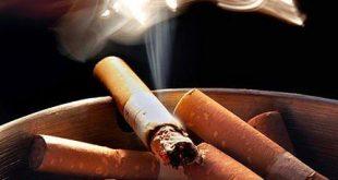 Điều kiện chế biến nguyên liệu thuốc lá-SBLAW
