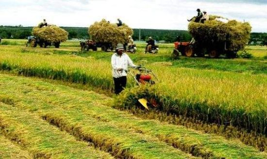 Luật nông nghiệp
